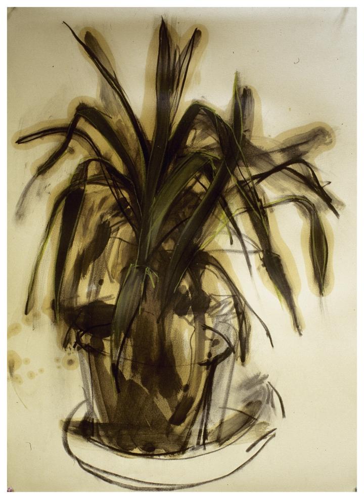 Plant - 1988